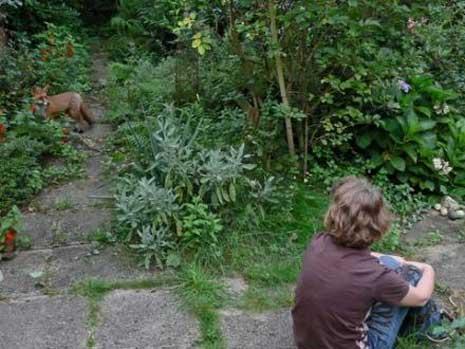 """11 Kommentare zu """"Ungewöhnlicher Besuch in unserem Naturgarten"""""""